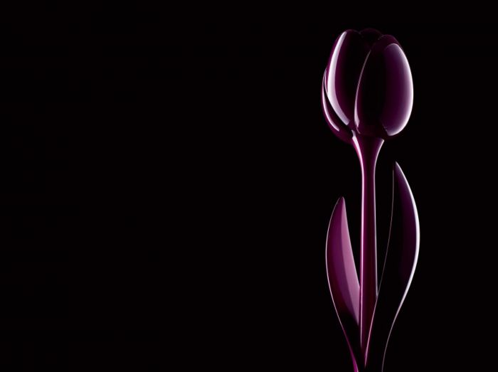 Tulip XL Myyour